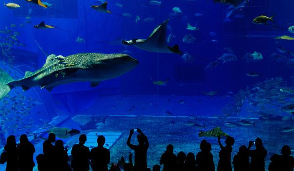 Shedd Aquarium in Illinois